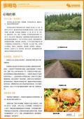 崇明岛旅游攻略预览2
